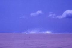 60-Imagin Ocean I